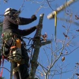 Etêtage des arbres et entretien à Lunel Montpellier et dans le Gard par Gargowitch espaces verts